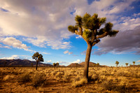 Dusk Over Joshua Tree - California Landscape Photograph