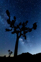 Joshua Tree Under the Stars - California Landscape Photograph